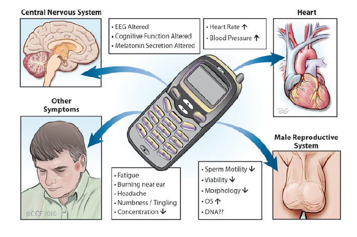 Potential-effects-of-cell-phone-use-on-human-body